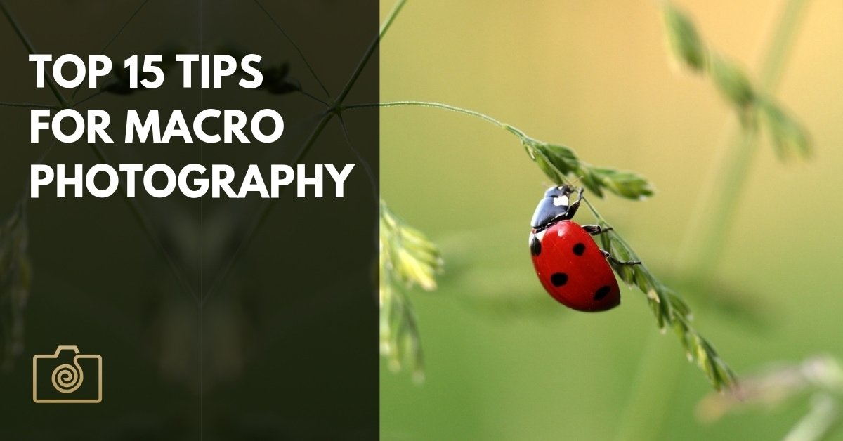Top 15 tips for macro photography
