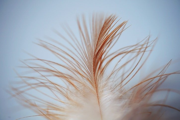 2-feather