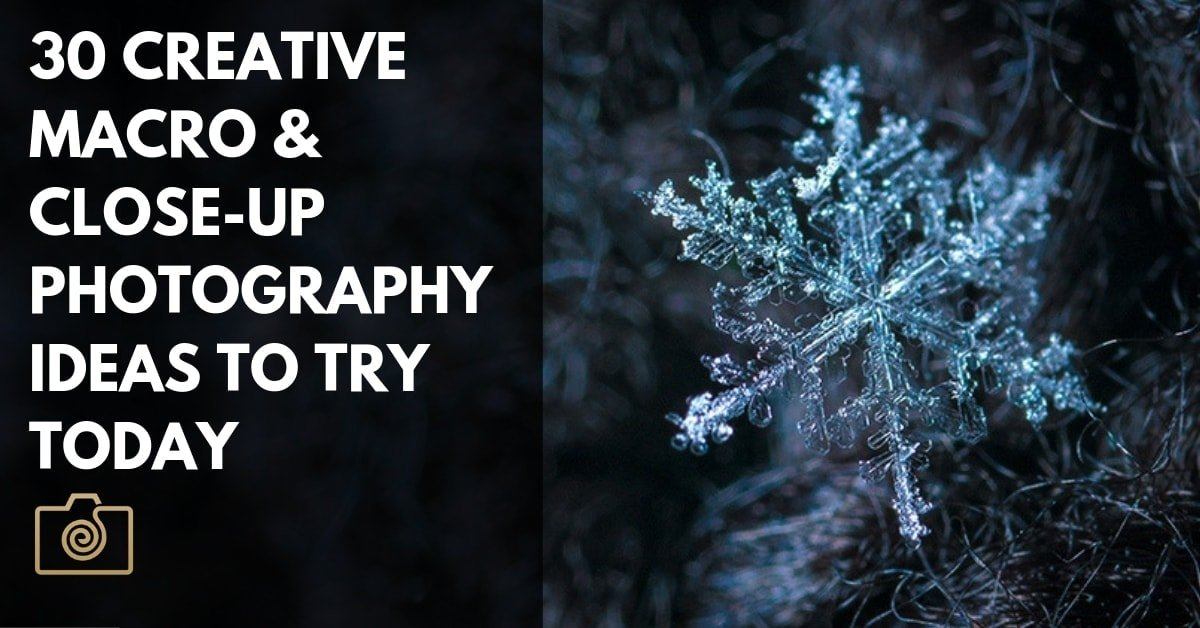 30 Creative Macro Photography Ideas to Try Today