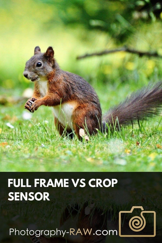 Full Frame vs Crop Sensor: The Debate Moves into 2019