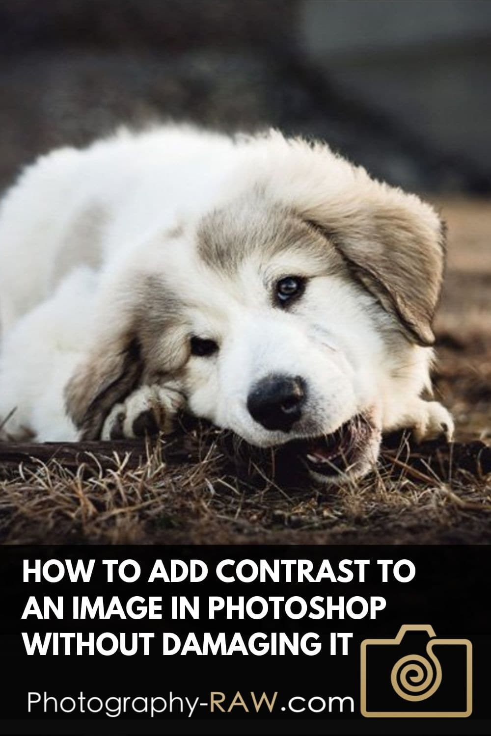How to Add Contrast to an Image in Photoshop Without Damaging it