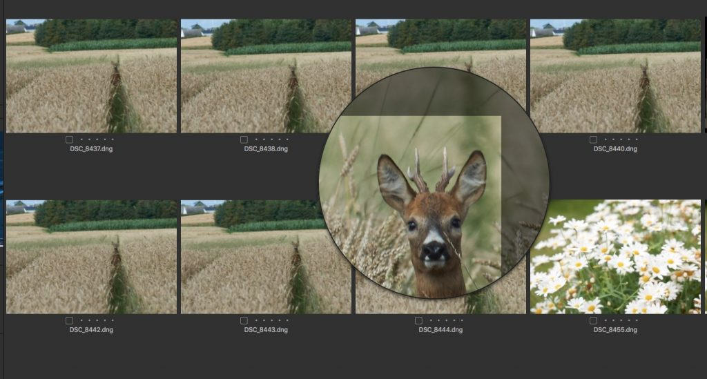 Loupe view is one of the things we like with Capture One in this review