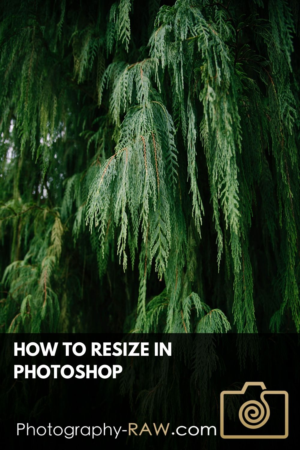 Find out how to resize your images in Photoshop CC. Get the quick instructions plus how to combine it with the best image format for exporting.