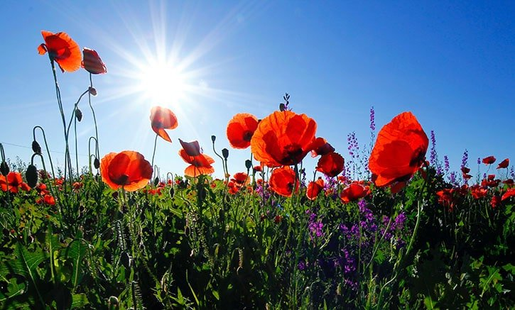 include the sun in your flower photography