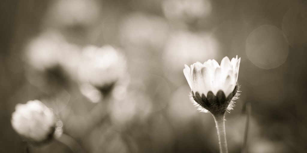 depth of field can enhance black and white photography