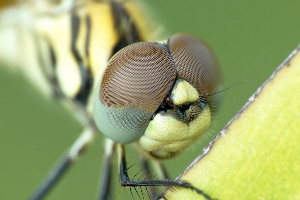 Best Macro Photography Settings