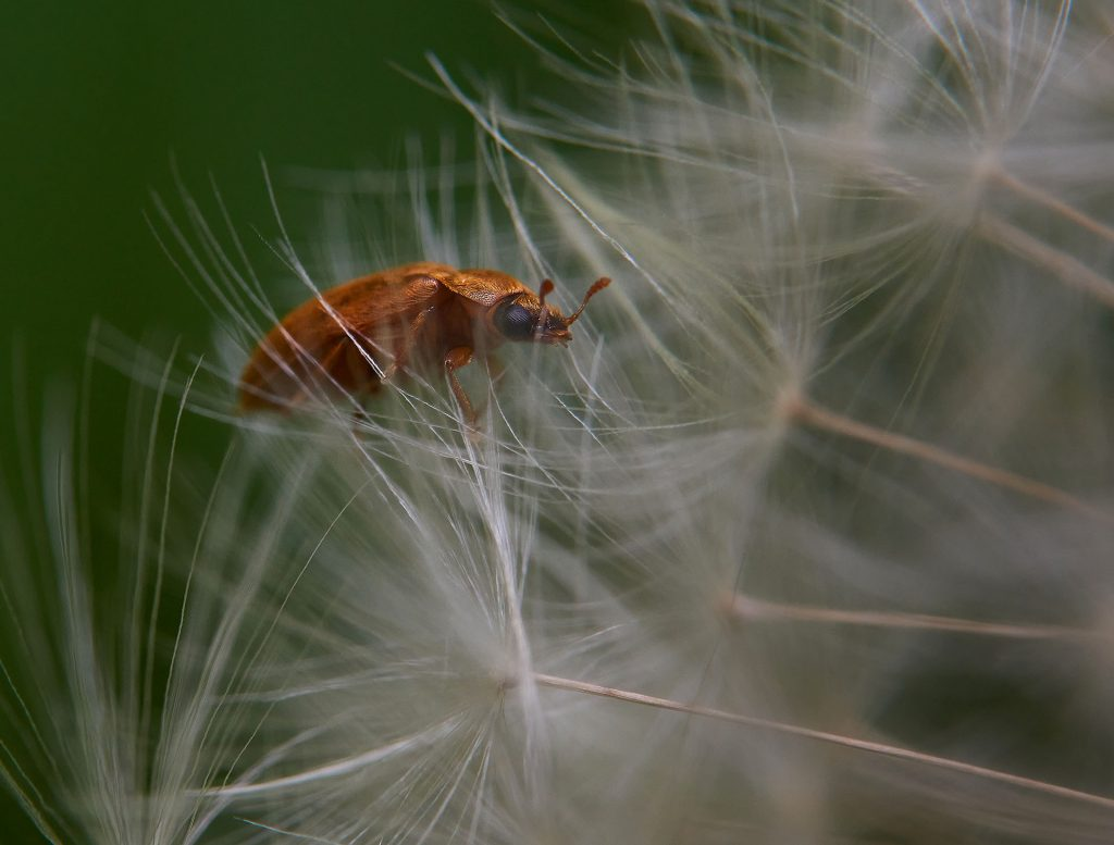 What is macro photography? This is  a true macro photo.