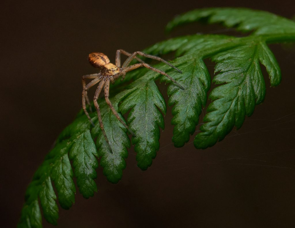spiders are popular macro photography subjects