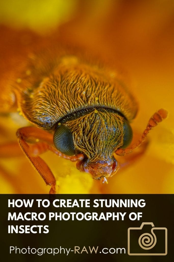 Creating Stunning Macro Photography of Insects